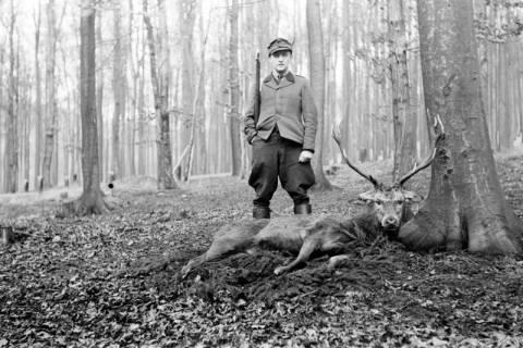 ARH NL Dierssen 0143/0015, Oberförstner Kastner mit erlegtem Hirsch, Springe, um 1949