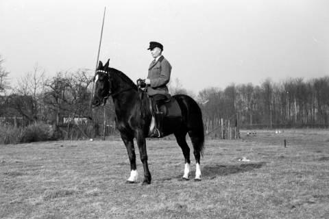 ARH NL Dierssen 0146/0003, Reiterverein, Springe, um 1949
