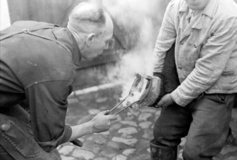 ARH NL Dierssen 0148/0013, Hufschmied, um 1949