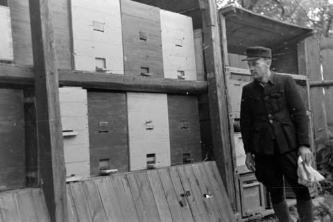 ARH NL Dierssen 0149/0019, Bienenstand, um 1949