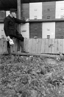 ARH NL Dierssen 0149/0020, Bienenstand, um 1949
