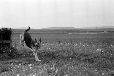 ARH NL Dierssen 0153/0001, Hundeschule, 1949
