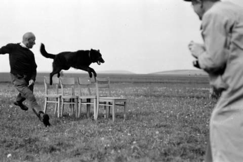 ARH NL Dierssen 0153/0003, Hundeschule, 1949