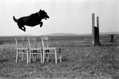 ARH NL Dierssen 0153/0004, Hundeschule, 1949