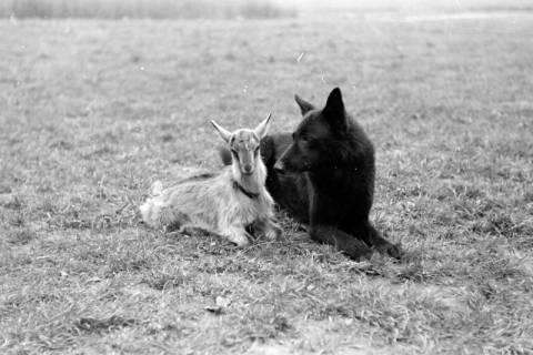 ARH NL Dierssen 0153/0005, Hundeschule, 1949