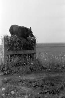 ARH NL Dierssen 0153/0007, Hundeschule, 1949