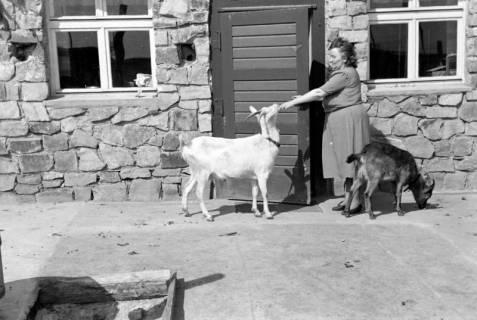 ARH NL Dierssen 0157/0007, Familie Graf, 1949
