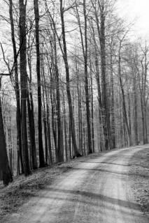 ARH NL Dierssen 0157/0011, Frühling im Deister, 1949