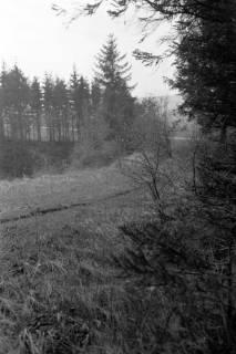 ARH NL Dierssen 0159/0022, Birkenweg, 1949