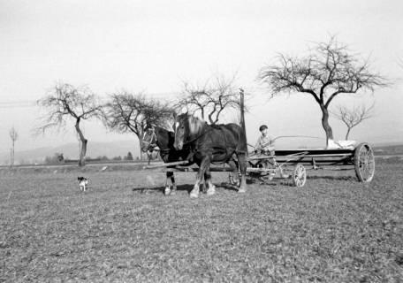 ARH NL Dierssen 0162/0006, Frühjahrs-Feldbestellung, 1949