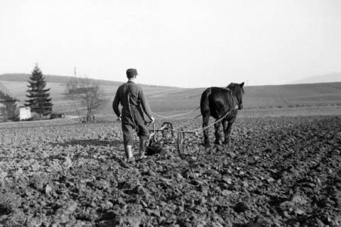 ARH NL Dierssen 0162/0008, Frühjahrs-Feldbestellung, 1949