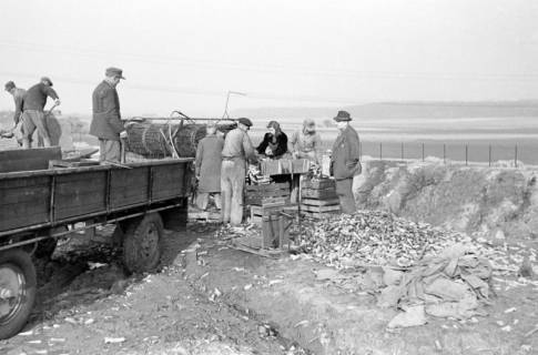 ARH NL Dierssen 0164/0012, Rübensäuberungsmaschine, 1949