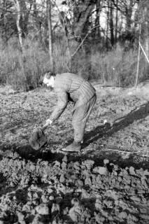 ARH NL Dierssen 0164/0021, Herr Barreuschee beim Graben, 1949
