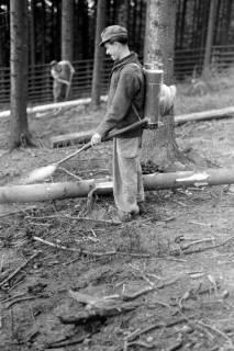 ARH NL Dierssen 0168/0022, Borkenkäfer Bekämpfung, 1949