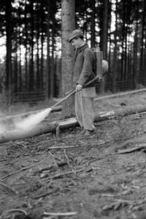 ARH NL Dierssen 0168/0023, Borkenkäfer Bekämpfung, 1949