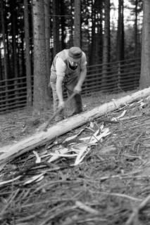 ARH NL Dierssen 0168/0024, Borkenkäfer Bekämpfung, 1949