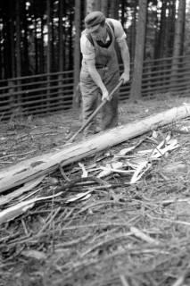 ARH NL Dierssen 0168/0025, Borkenkäfer Bekämpfung, 1949