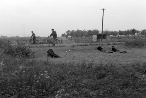 ARH NL Dierssen 0169/0002, Aufnahmen für Kripo - Mordtatort, 1949