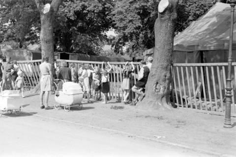 ARH NL Dierssen 0169/0014, Zirkus, 1949