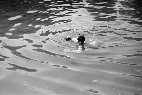 ARH NL Dierssen 0175/0006, Schwimmfest, 1949