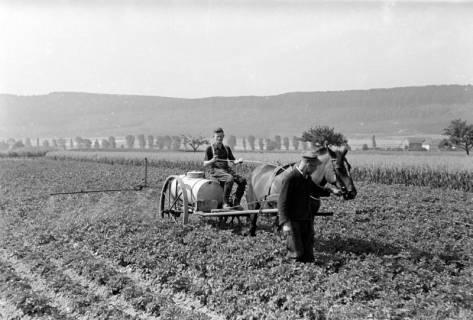 ARH NL Dierssen 0177/0013, Bekämpfung Kartoffelkäfer, 1949