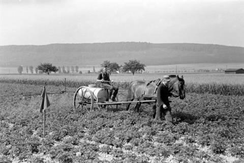 ARH NL Dierssen 0177/0014, Bekämpfung Kartoffelkäfer, 1949