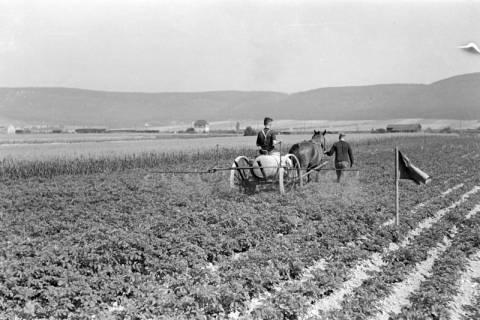 ARH NL Dierssen 0177/0015, Bekämpfung Kartoffelkäfer, 1949