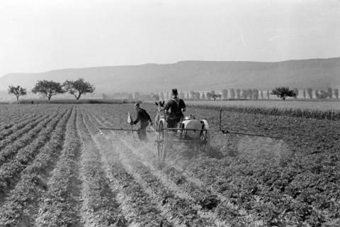 ARH NL Dierssen 0177/0016, Bekämpfung Kartoffelkäfer, 1949