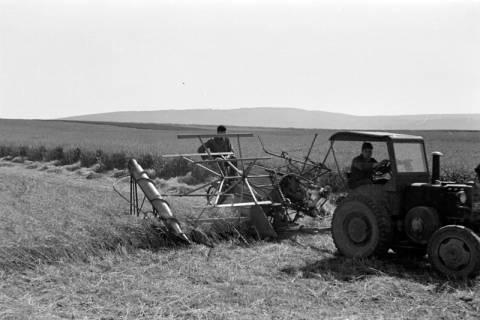 ARH NL Dierssen 0177/0020, Mähmaschine, 1949