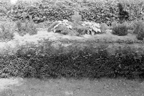 ARH NL Dierssen 0182/0017, Russische Kriegsgräber, 1949