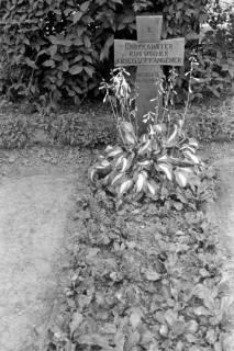 ARH NL Dierssen 0182/0019, Russische Kriegsgräber, 1949