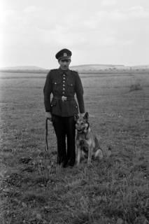 ARH NL Dierssen 0185/0022, Hundeschule, 1949