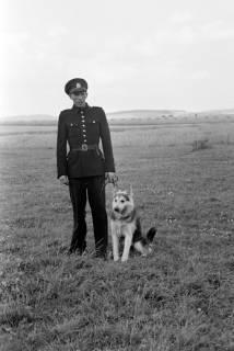 ARH NL Dierssen 0185/0024, Hundeschule, 1949