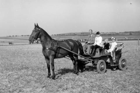 ARH NL Dierssen 0203/0004, Reiterfest, 1949