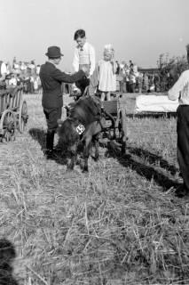 ARH NL Dierssen 0203/0009, Reiterfest, 1949