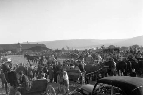ARH NL Dierssen 0203/0010, Reiterfest, 1949