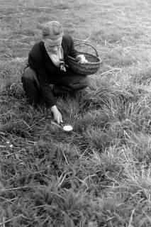 ARH NL Dierssen 0204/0007, Barreuschee sucht Champingnons, 1949