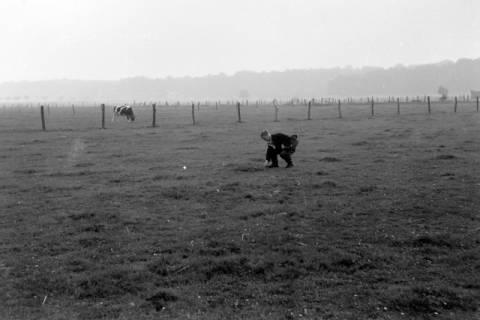 ARH NL Dierssen 0204/0008, Barreuschee sucht Champingnons, 1949
