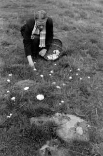 ARH NL Dierssen 0204/0009, Barreuschee sucht Champingnons, 1949