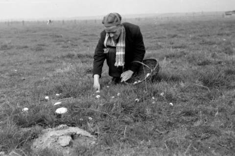 ARH NL Dierssen 0204/0010, Barreuschee sucht Champingnons, 1949