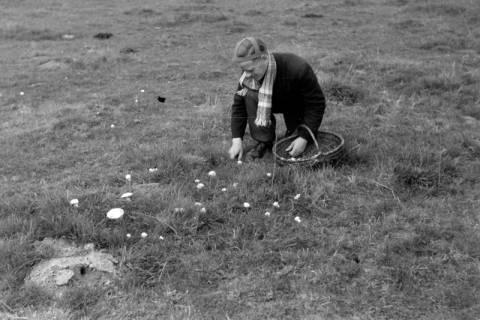 ARH NL Dierssen 0204/0011, Barreuschee sucht Champingnons, 1949