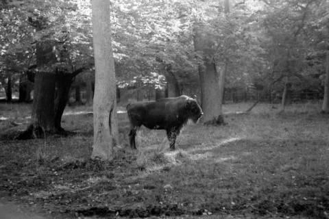 ARH NL Dierssen 0208/0002, Im Wisentgehege, 1949
