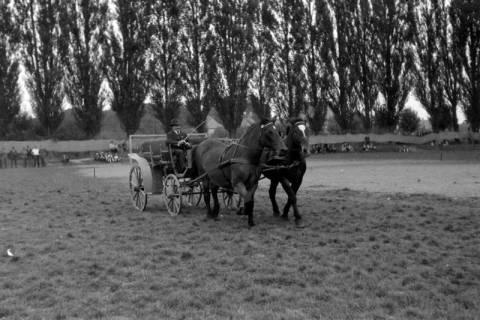 ARH NL Dierssen 0208/0032, Tag des Roten Kreuzes (Umzug und Reiten), 1949