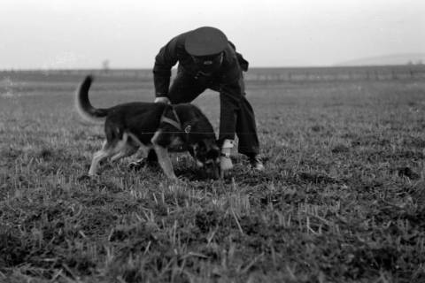 ARH NL Dierssen 0214/0002, Hundeschule, 1949