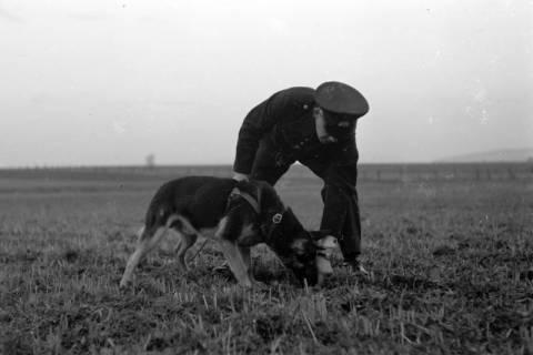 ARH NL Dierssen 0214/0003, Hundeschule, 1949