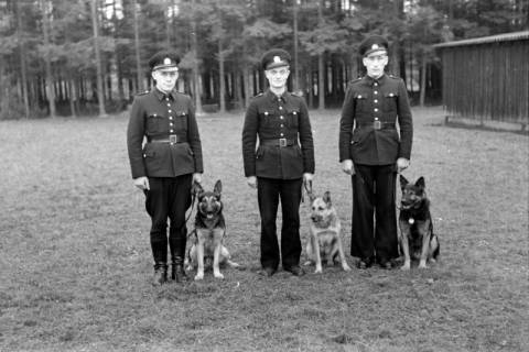 ARH NL Dierssen 0214/0010, Hundeschule, 1949