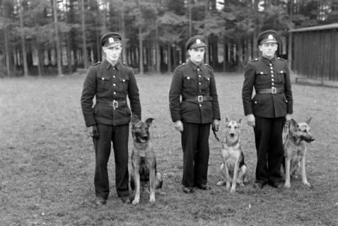 ARH NL Dierssen 0214/0011, Hundeschule, 1949