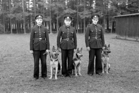 ARH NL Dierssen 0214/0012, Hundeschule, 1949