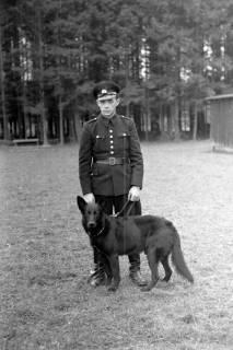 ARH NL Dierssen 0214/0013, Hundeschule, 1949