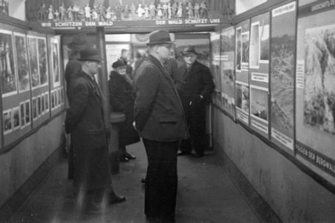 """ARH NL Dierssen 1005/0021, Ausstellung """"Der Wald..."""" (Herzog Ernst-August), 1950"""